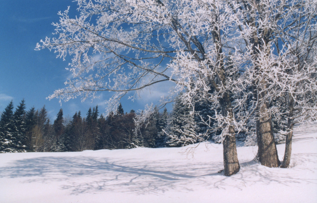 winter-1560310-1599x1025